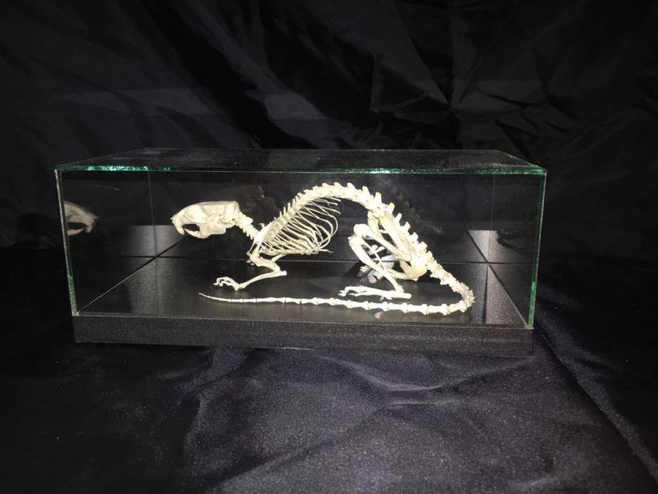 rat-skelet