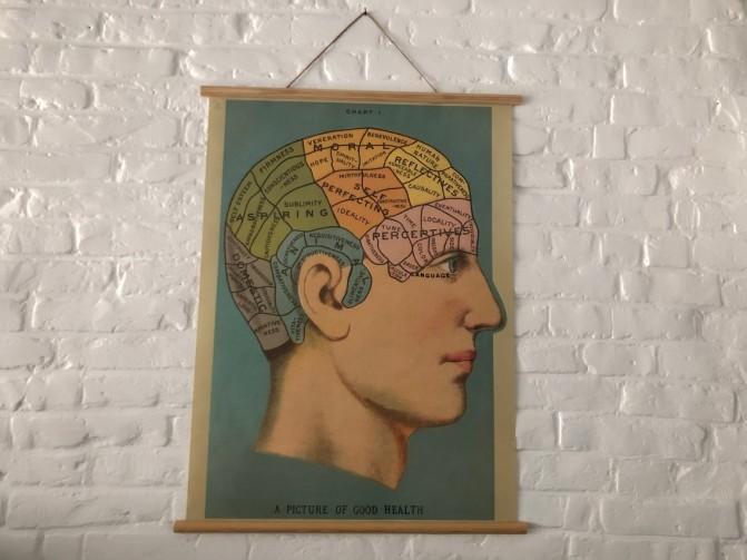 Cavallini poster phrenology
