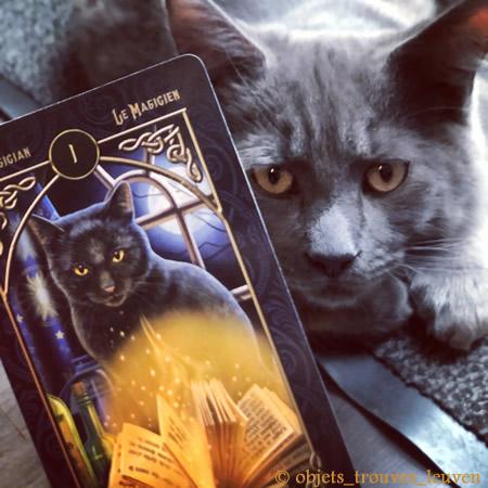 Houdini helpt je graag bij het kiezen van tarotkaarten die bij jou passen